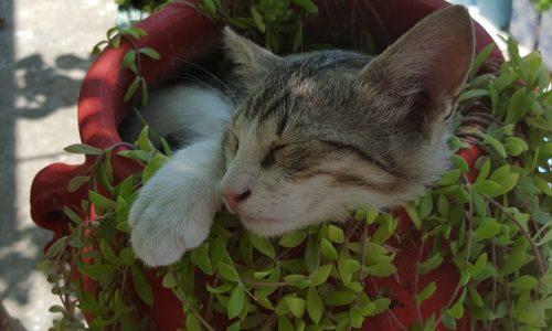 kat op Kos